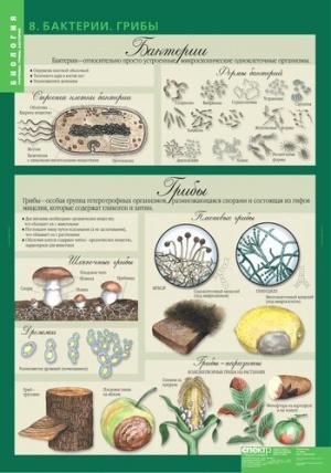 """Комплект таблиц по биологии дем.   """"Биология 6 класс Растения, грибы, лишайники """" 14 таблиц."""